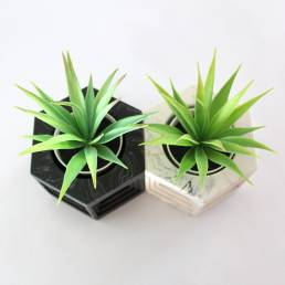 Planters Top View